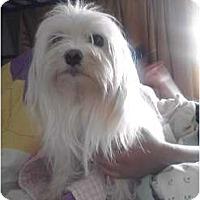 Adopt A Pet :: Angel - Brewster, NY