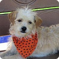 Adopt A Pet :: Toby - Santa Ana, CA