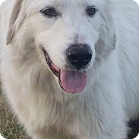 Adopt A Pet :: George - New Boston, NH