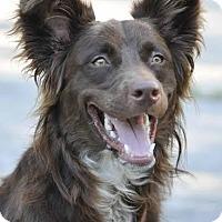 Adopt A Pet :: Jake - Ormond Beach, FL