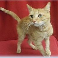 Adopt A Pet :: Manny - Herndon, VA