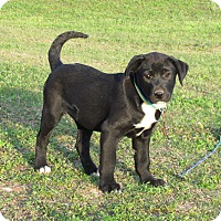Adopt A Pet :: YEAGER - Bedminster, NJ