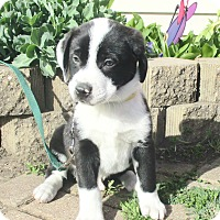 Adopt A Pet :: Turf - West Chicago, IL