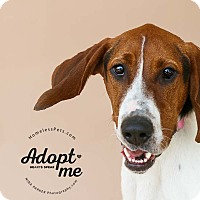 Adopt A Pet :: Elvis - Marietta, GA