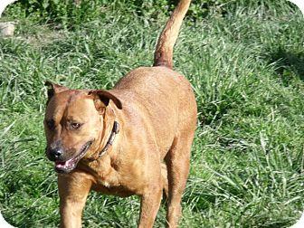 Labrador Retriever Mix Dog for adoption in Hancock, Michigan - Meeka! *Sponsored*