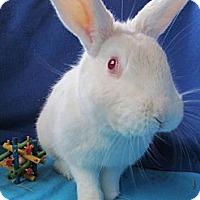 Adopt A Pet :: Bianca - Huntsville, AL