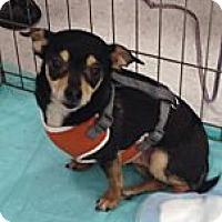 Adopt A Pet :: Niko - Seattle, WA