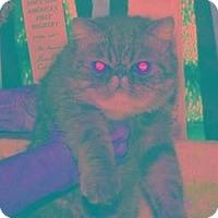 Adopt A Pet :: Houdini - Beverly Hills, CA
