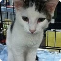 Adopt A Pet :: Spencer - Riverside, RI