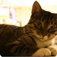 Adopt A Pet :: Violet - Jenkintown, PA