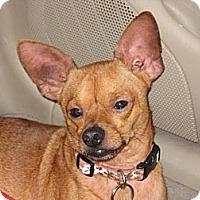 Adopt A Pet :: CoCo - Kingwood, TX