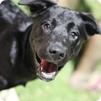 Adopt A Pet :: Shadow - Justin, TX