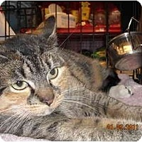 Adopt A Pet :: Leyla - Riverside, RI