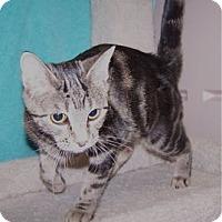 Adopt A Pet :: Psyche - Colorado Springs, CO