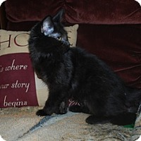 Adopt A Pet :: Viola - St. Louis, MO