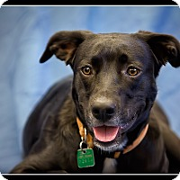 Adopt A Pet :: Maxwell - Wickenburg, AZ