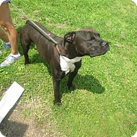 Adopt A Pet :: #545-14 ADOPTED! - Zanesville, OH
