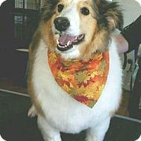 Adopt A Pet :: Tracy - Abingdon, MD