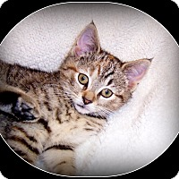 Adopt A Pet :: Jillian - South Plainfield, NJ