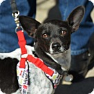 Adopt A Pet :: Cornette