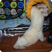 Adopt A Pet :: Sprout - Acworth, GA