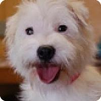 Adopt A Pet :: Sasha - North Benton, OH