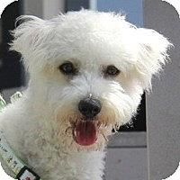 Adopt A Pet :: Alfie - La Costa, CA