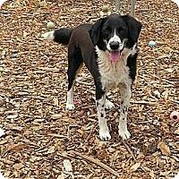 Adopt A Pet :: DJ - Russellville, KY
