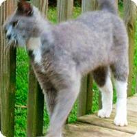 Adopt A Pet :: Miss Gracie - Harrisburg, NC