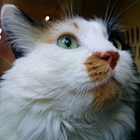 Adopt A Pet :: Jade - Tucson, AZ