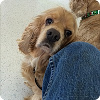 Adopt A Pet :: B.J. - Tacoma, WA