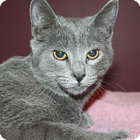 Adopt A Pet :: Westley - Santa Rosa, CA