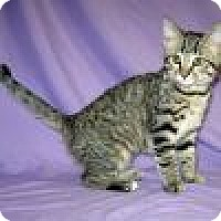 Adopt A Pet :: Khloe - Powell, OH