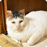 Adopt A Pet :: Marcus - Queens, NY
