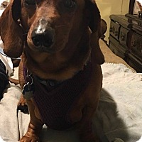 Adopt A Pet :: Slinky - Palmyra, NJ