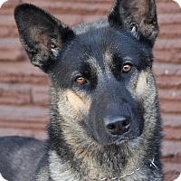 Adopt A Pet :: Sheila von Schlettau - Los Angeles, CA