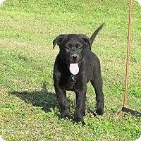 Adopt A Pet :: SAYDI - Hartford, CT
