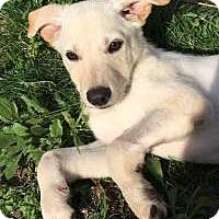Adopt A Pet :: Sonny - Marlton, NJ