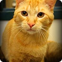 Adopt A Pet :: Patrick - Gaylord, MI