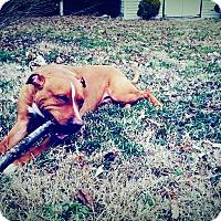 Adopt A Pet :: Dennis (COURTESY POST) - Baltimore, MD