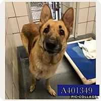 Adopt A Pet :: CASSY - San Antonio, TX