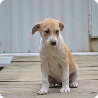 Adopt A Pet :: Karnie - Groton, MA