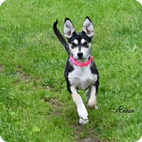 Adopt A Pet :: Rissa - ON HOLD - NO MORE APPLICATIONS - Bowie, MD