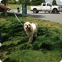 Adopt A Pet :: Tanner - Kannapolis, NC
