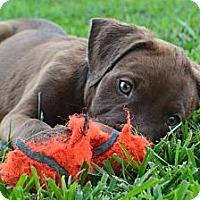 Adopt A Pet :: Cypress - New Boston, MI