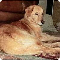 Adopt A Pet :: Scott - Denver, CO