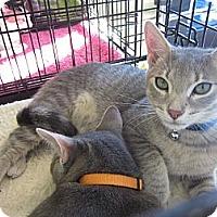 Adopt A Pet :: Scottie & Bones - Easley, SC