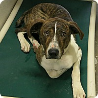 Adopt A Pet :: Stanley - Geneseo, IL