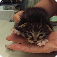 Adopt A Pet :: Carsen - Edmonton, AB