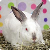 Adopt A Pet :: Carmello - Chicago, IL